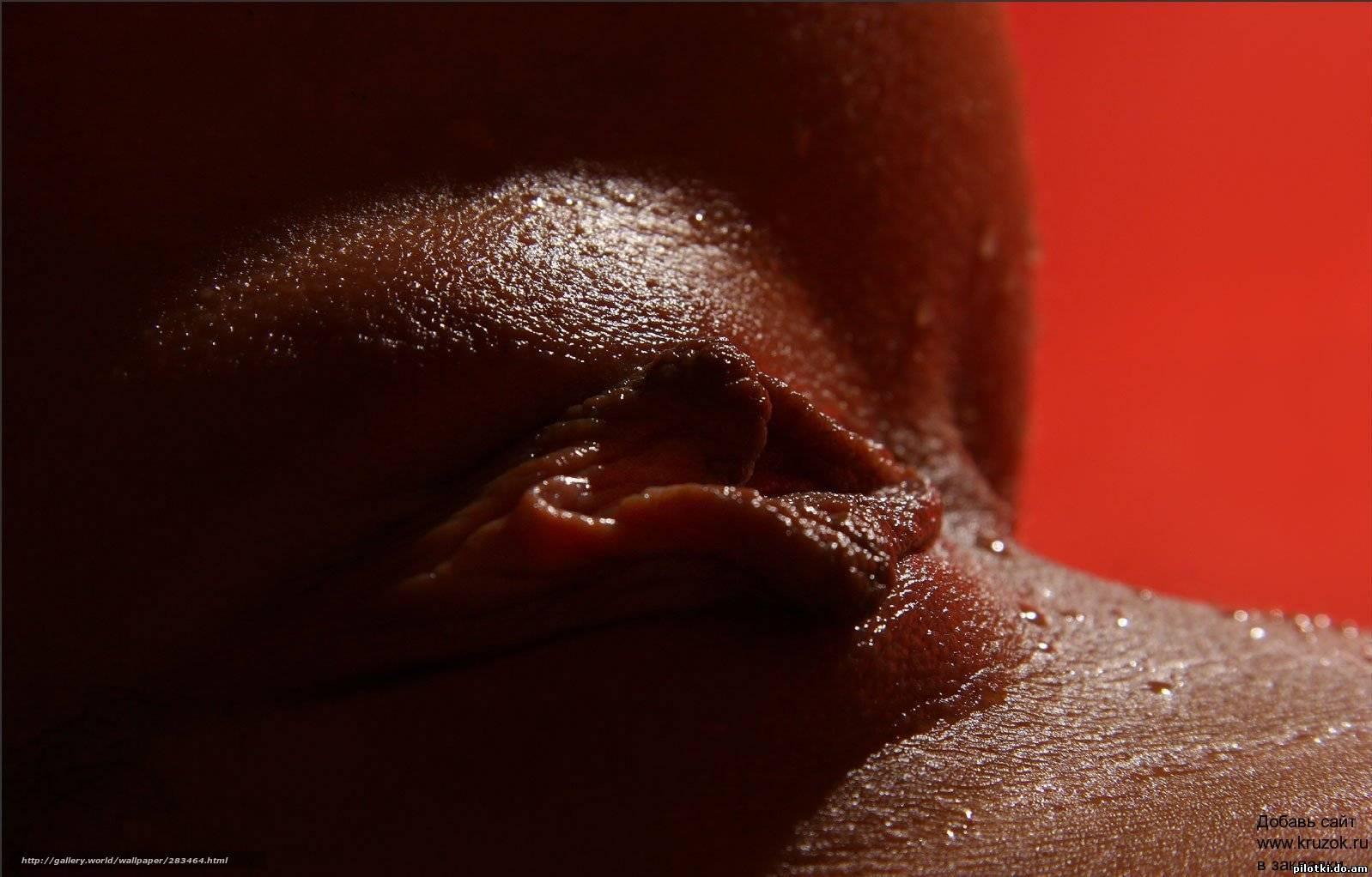 Фото женских половых губ макро