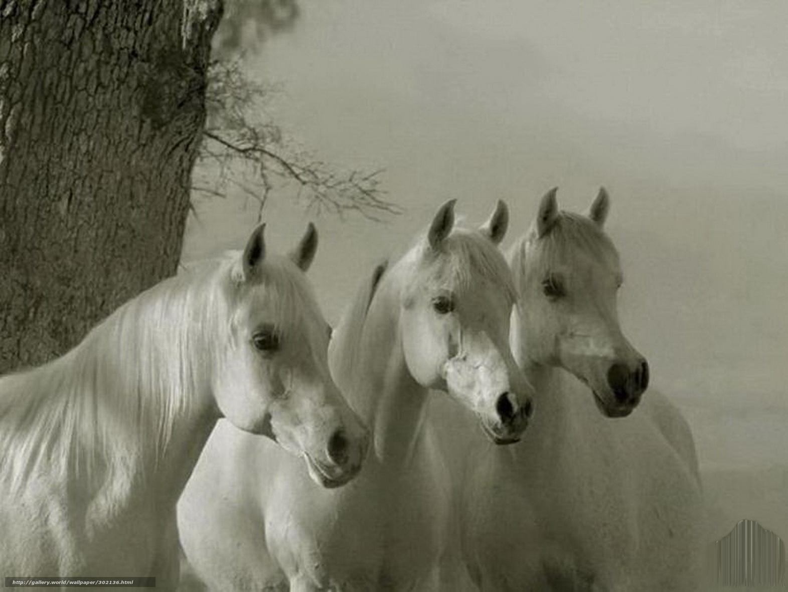 при белых коня видео