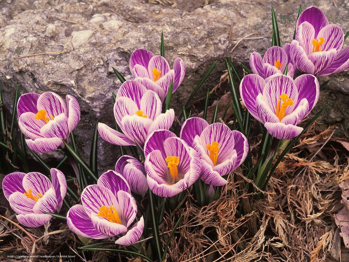 Фото на тему цветы