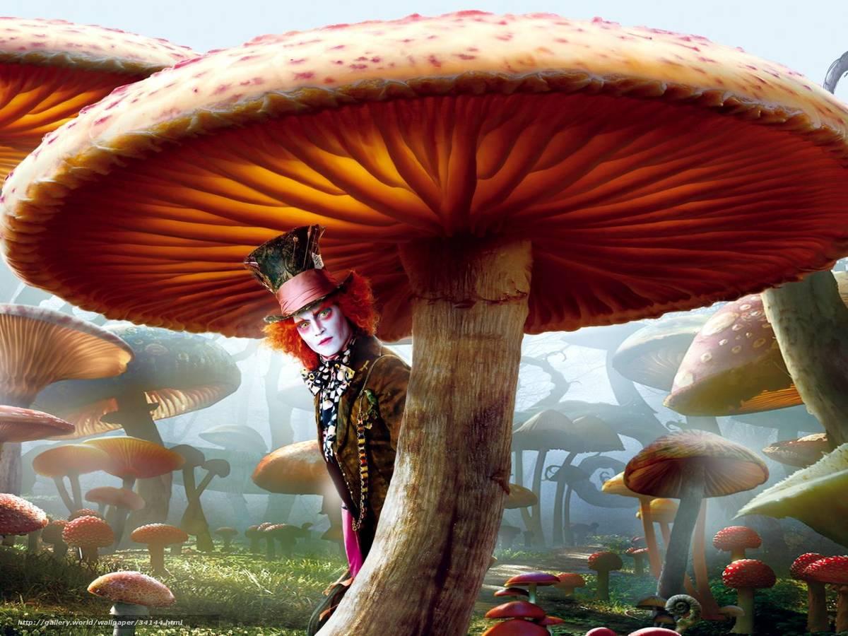 Снял девушку под грибами 13 фотография