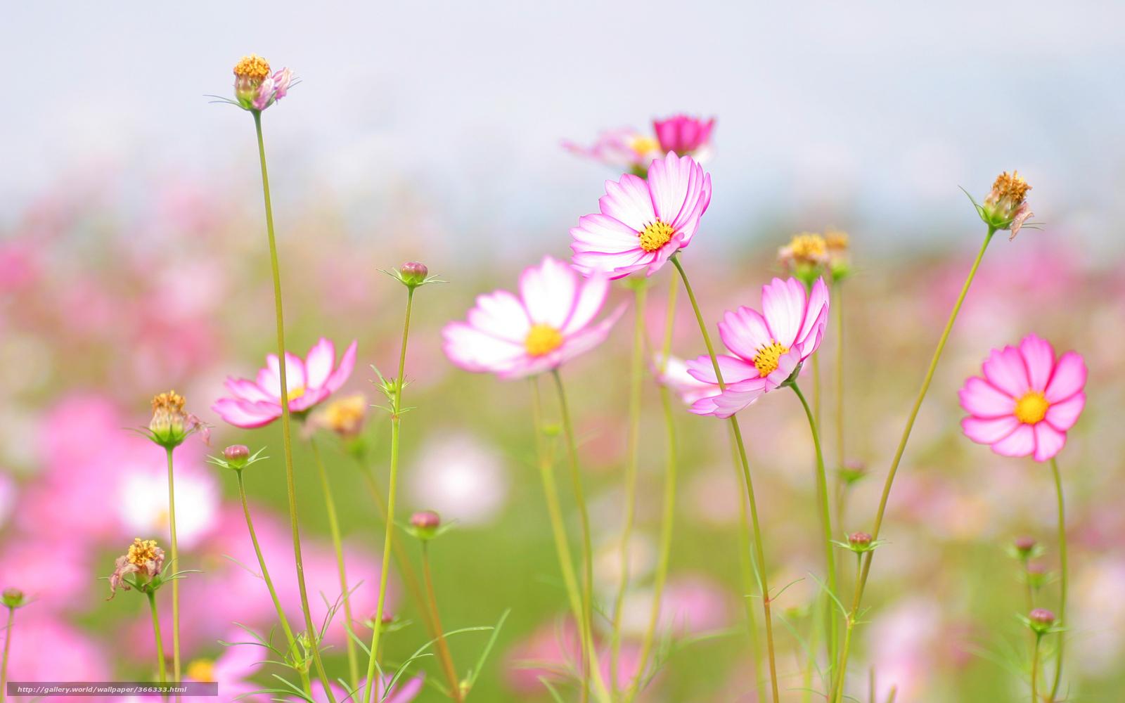 ... Frische, Blumen, Sommer №366333 / Abschnitt: Blumen / de.HallPic.com