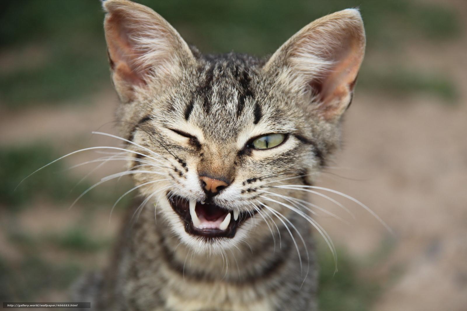 will a fixed cat spray