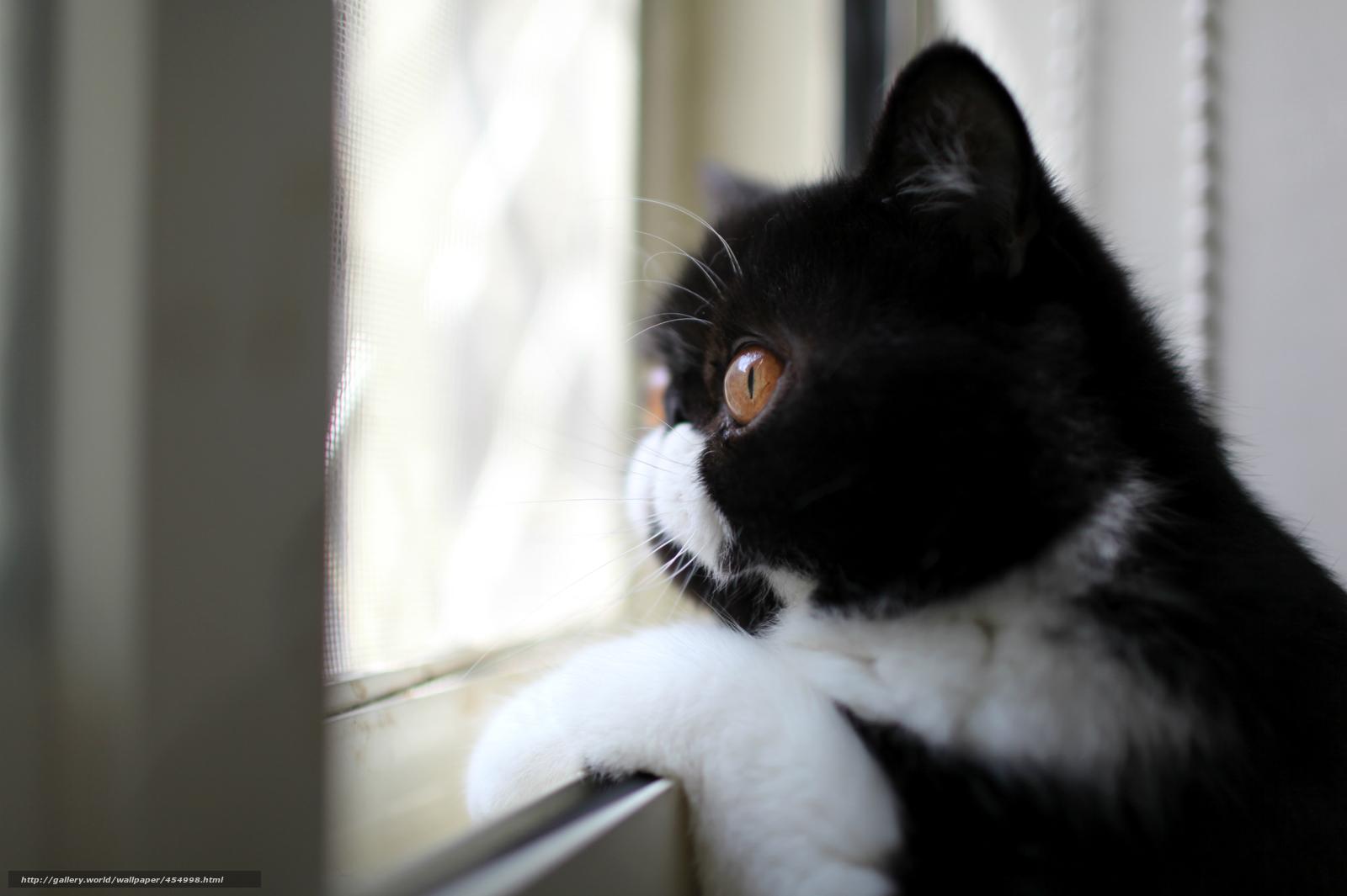 cor, perfil, preto-branco, ver, gato, olhando pela janela