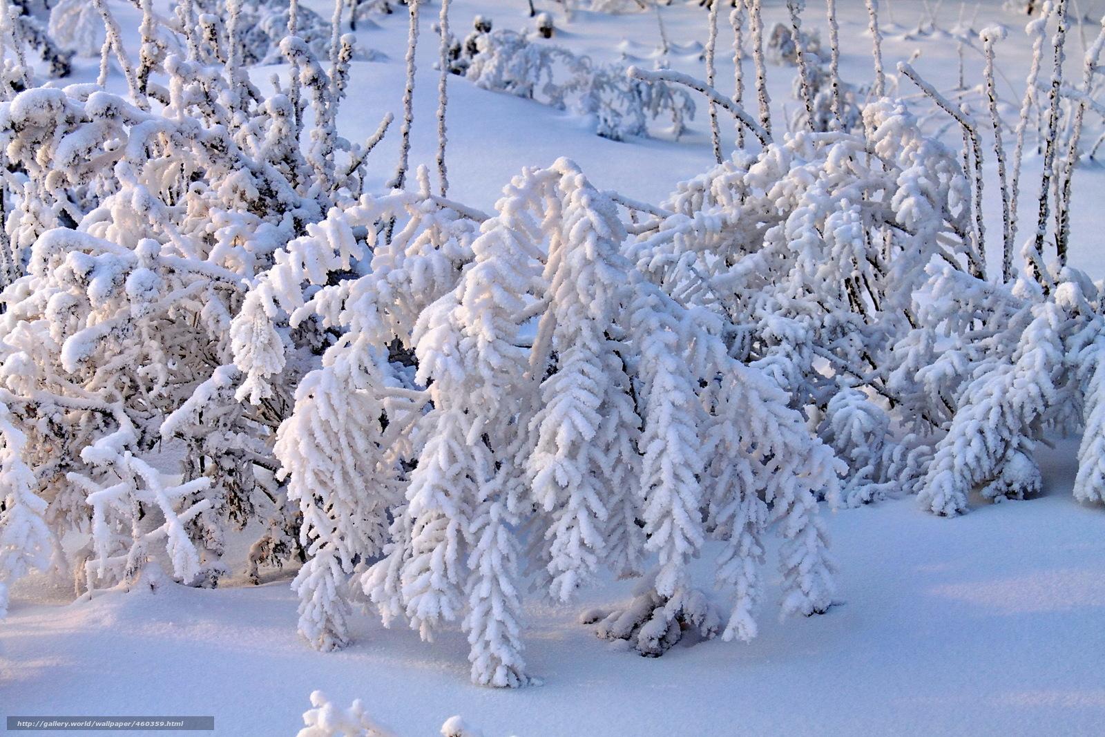 Так захотелось снега, морозца, елочки