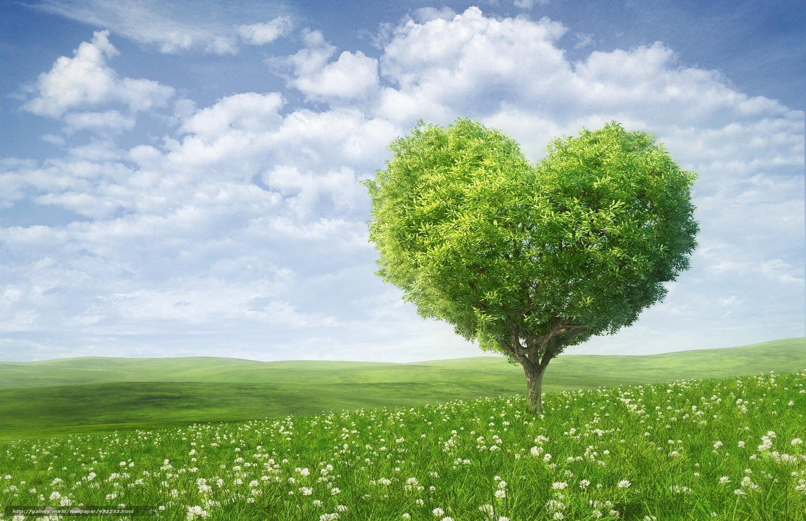 Resultado de imagem para campos verdes
