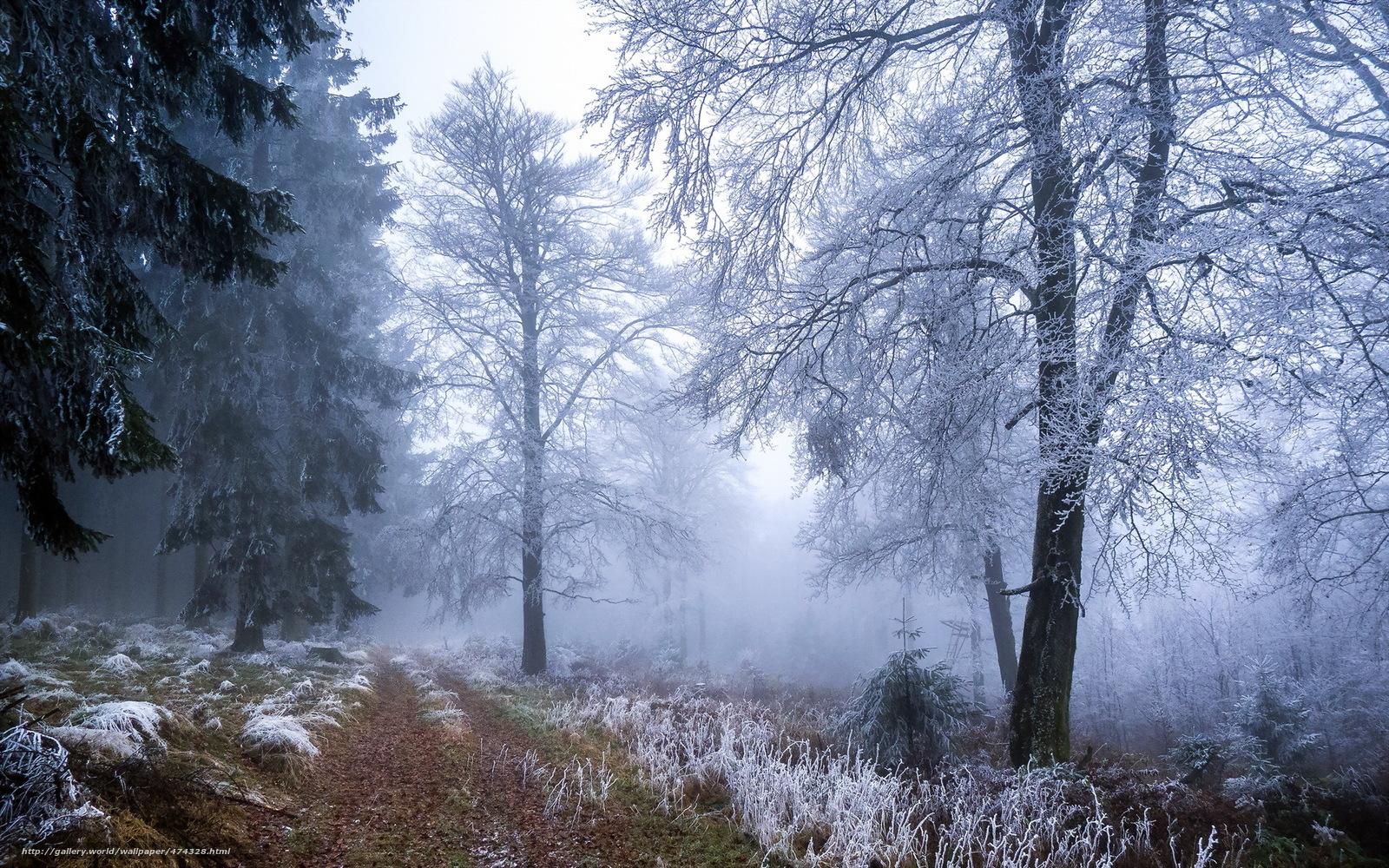 Прохожую в лесу 21 фотография