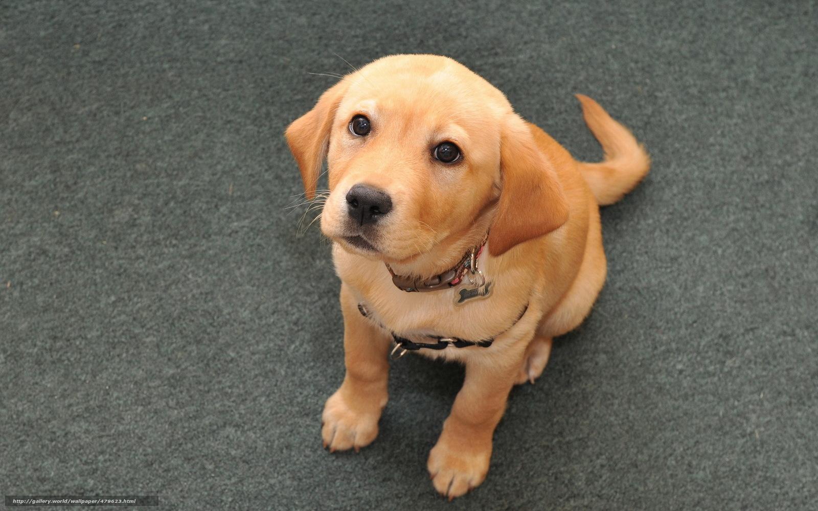 смотреть картинки про собак разных пород