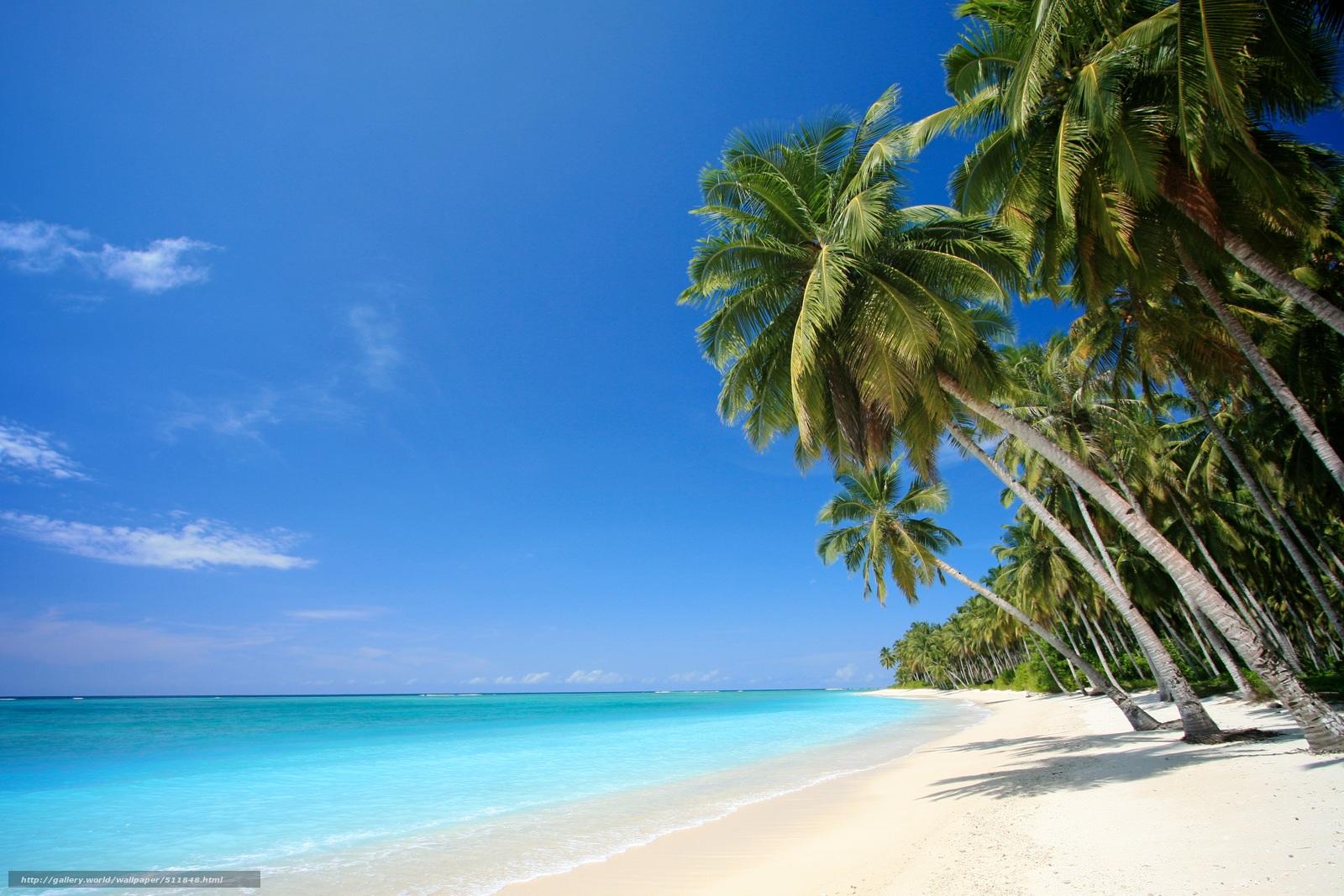 Смотреть в hd качестве новинкииндустрия развлечений/private tropical 24 11 фотография