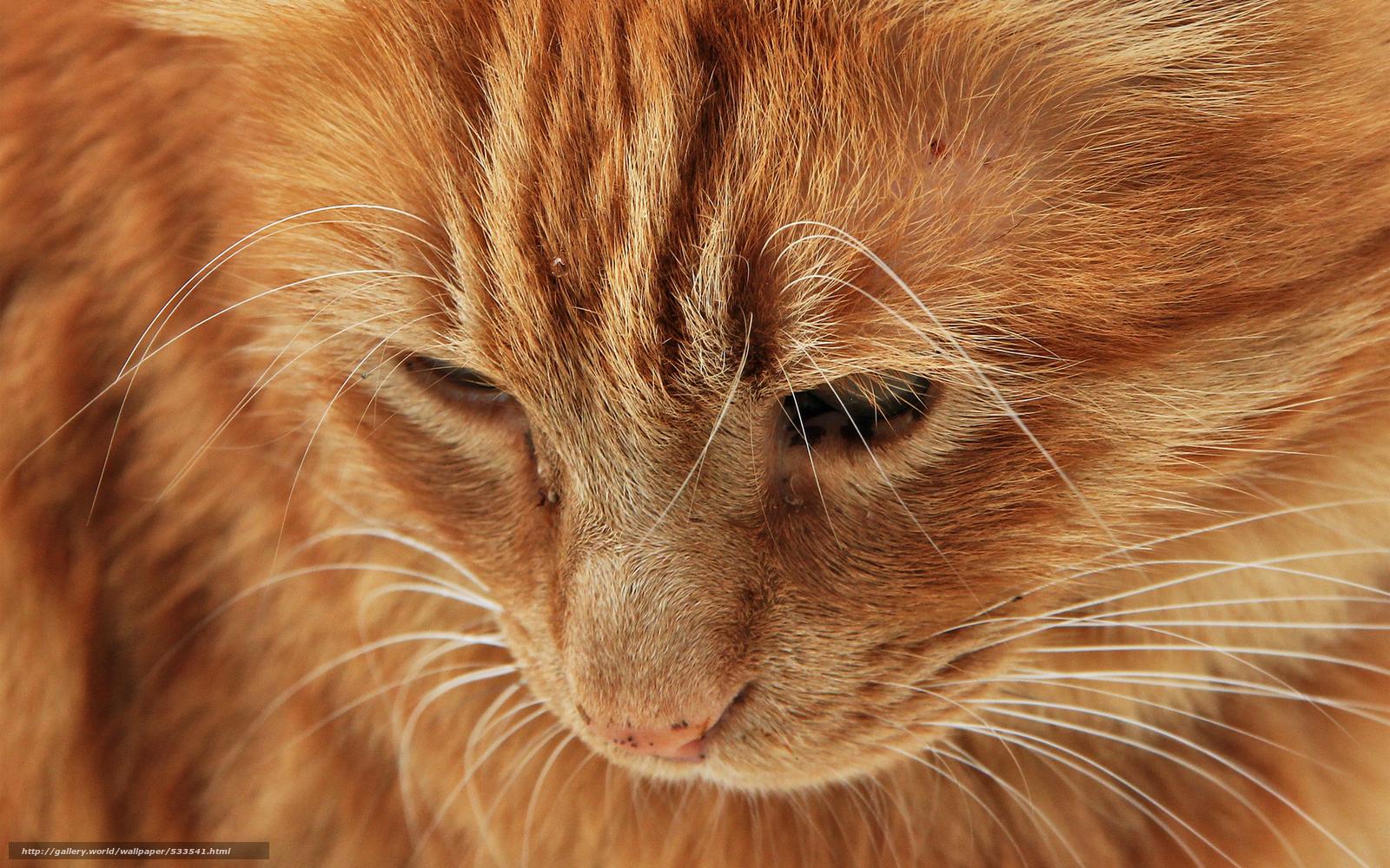 Картинка кот заглядывает - 572