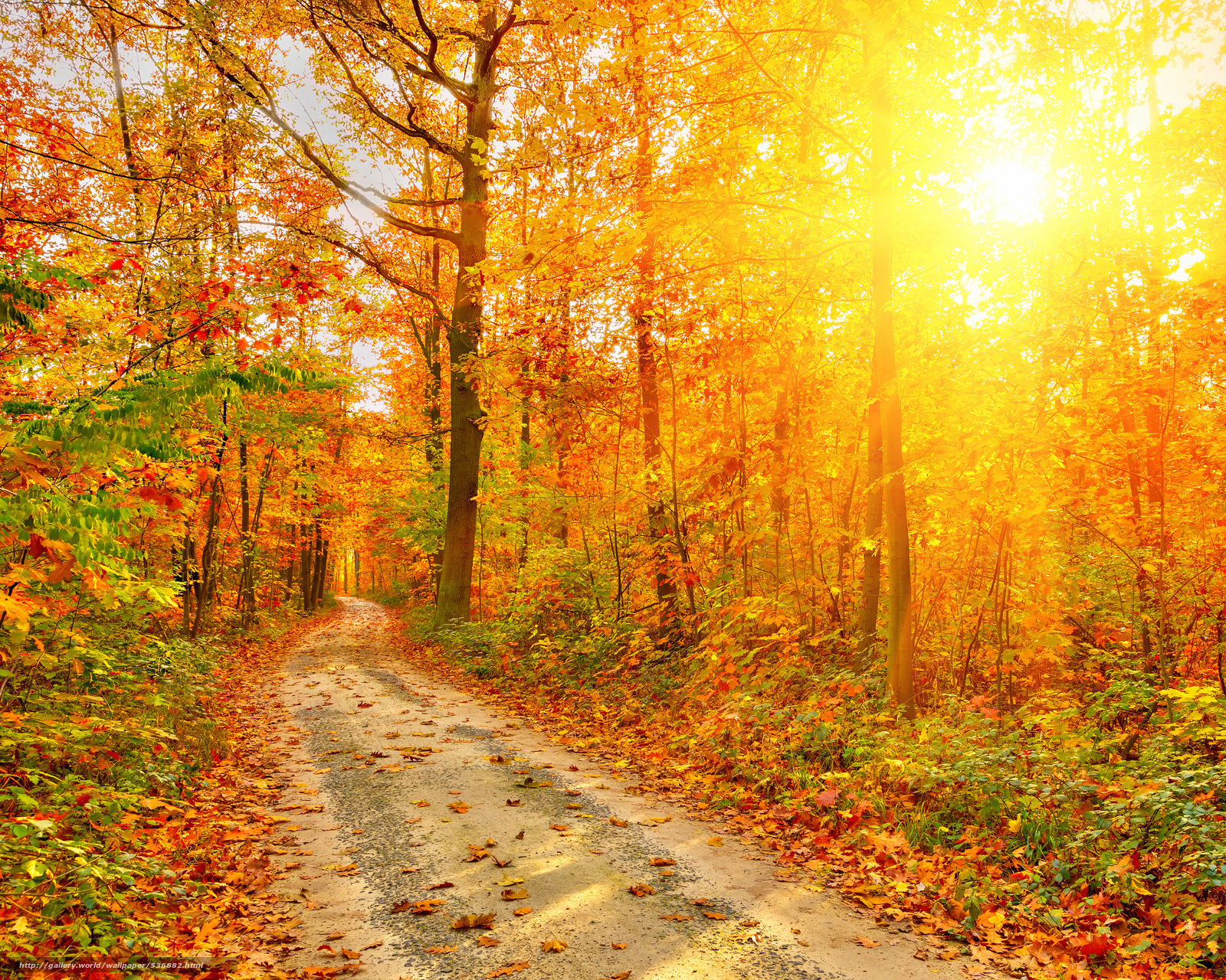 Лес дорога осень