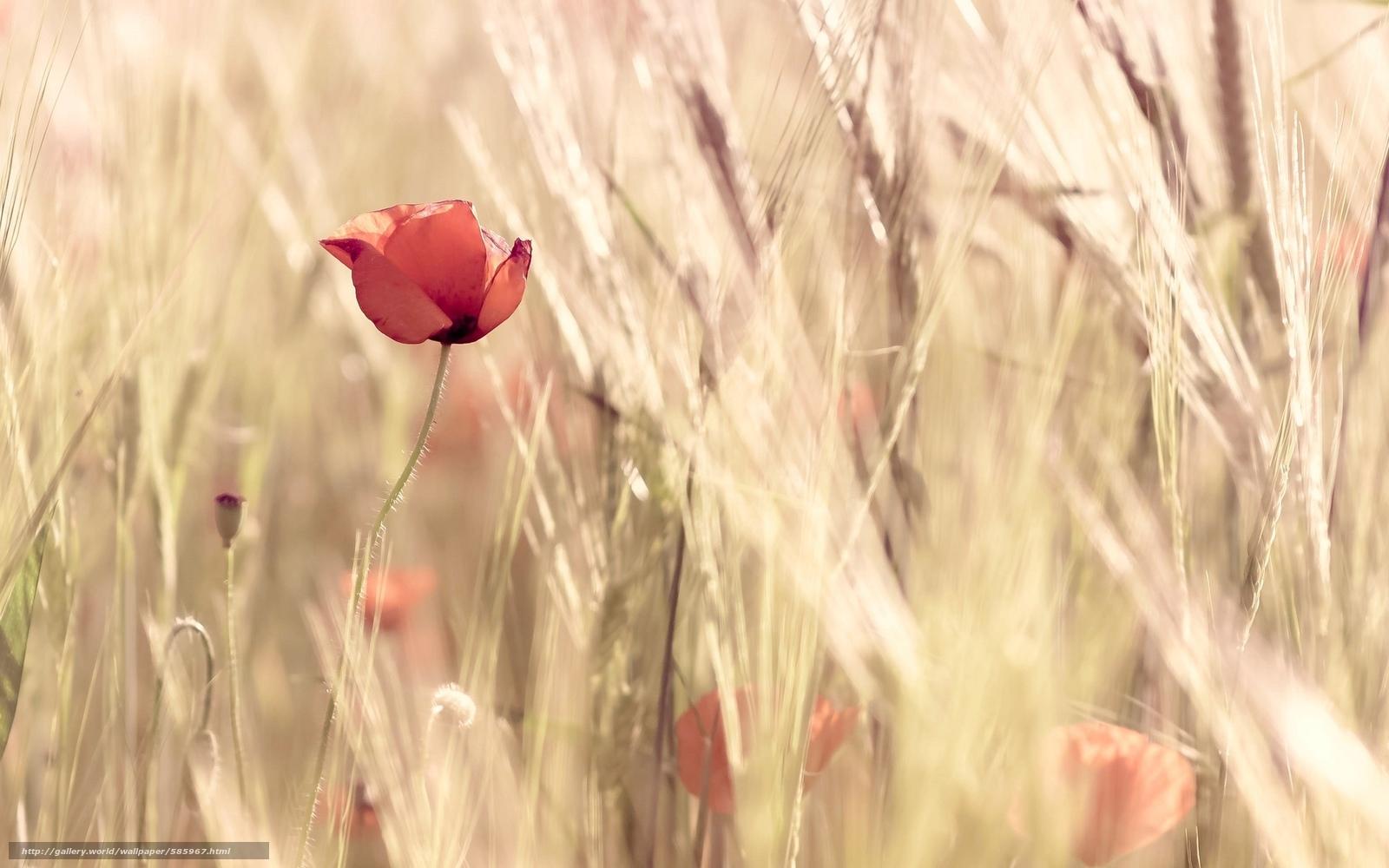 Carta da parati a fiorellini piccoli: carta da parati etsy it ...