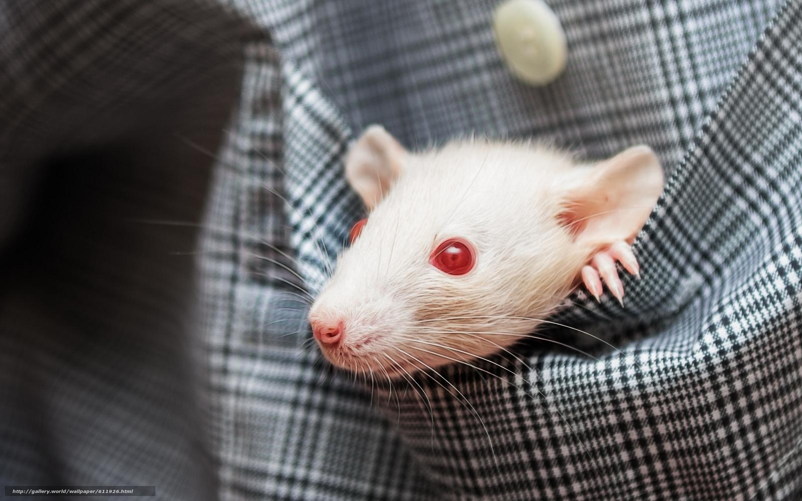 суперобложках, фото белого мышонка с красными глазами работников, которые