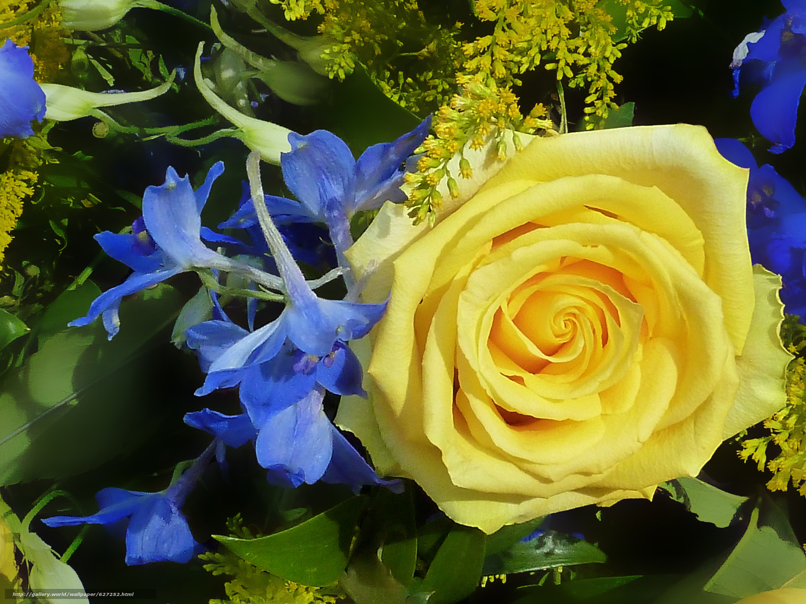 Скачать на телефон обои фото картинку на тему роза, цветы, флора, разширение 2048x1536