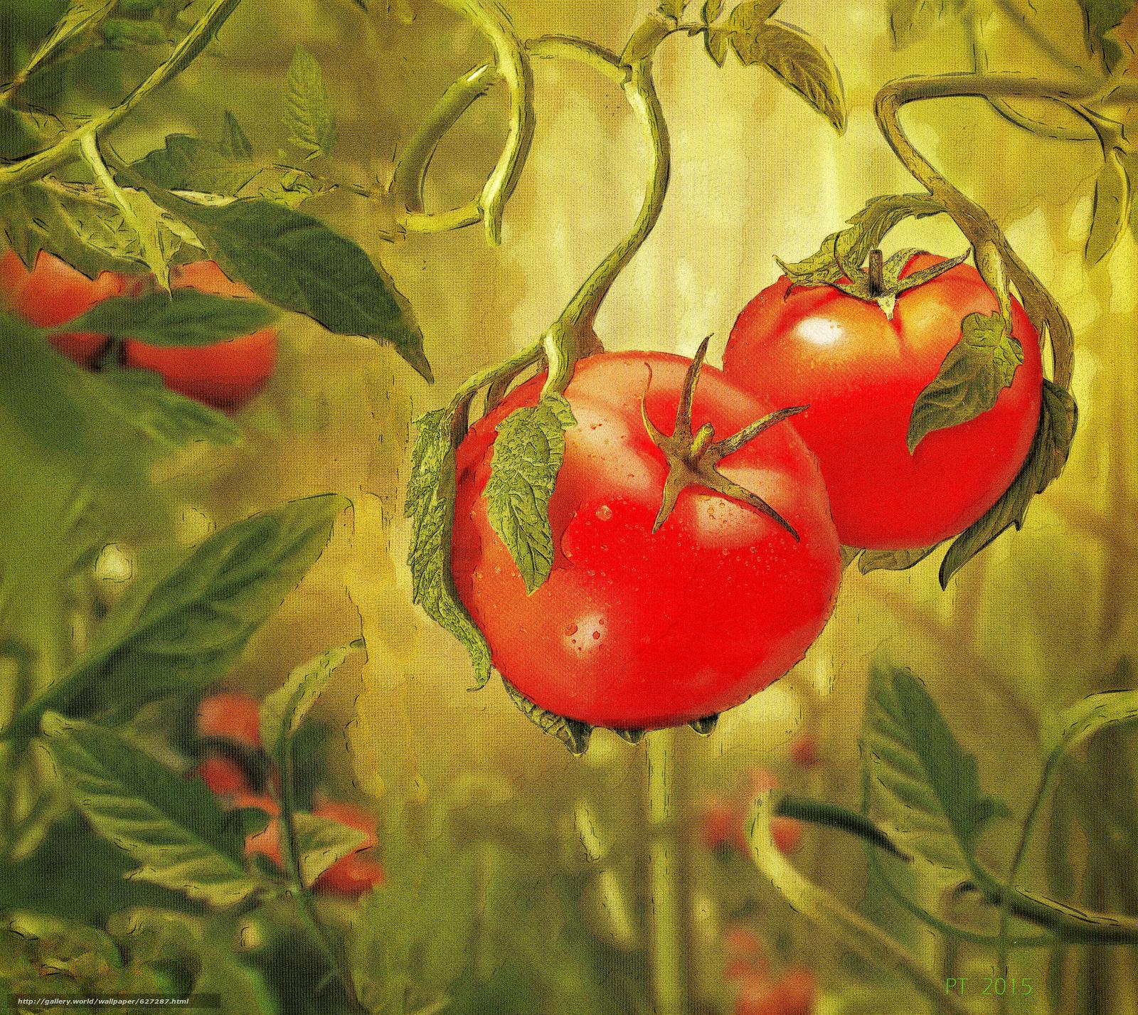 Скачать на телефон обои фото картинку на тему овощи, помидоры, живопись, разширение 3559x3174