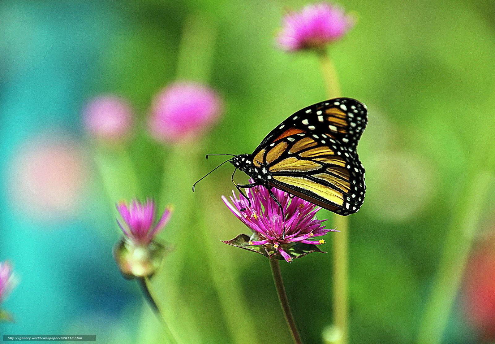 Скачать на телефон обои фото картинку на тему цветок, бабочка, макро, разширение 4863x3377