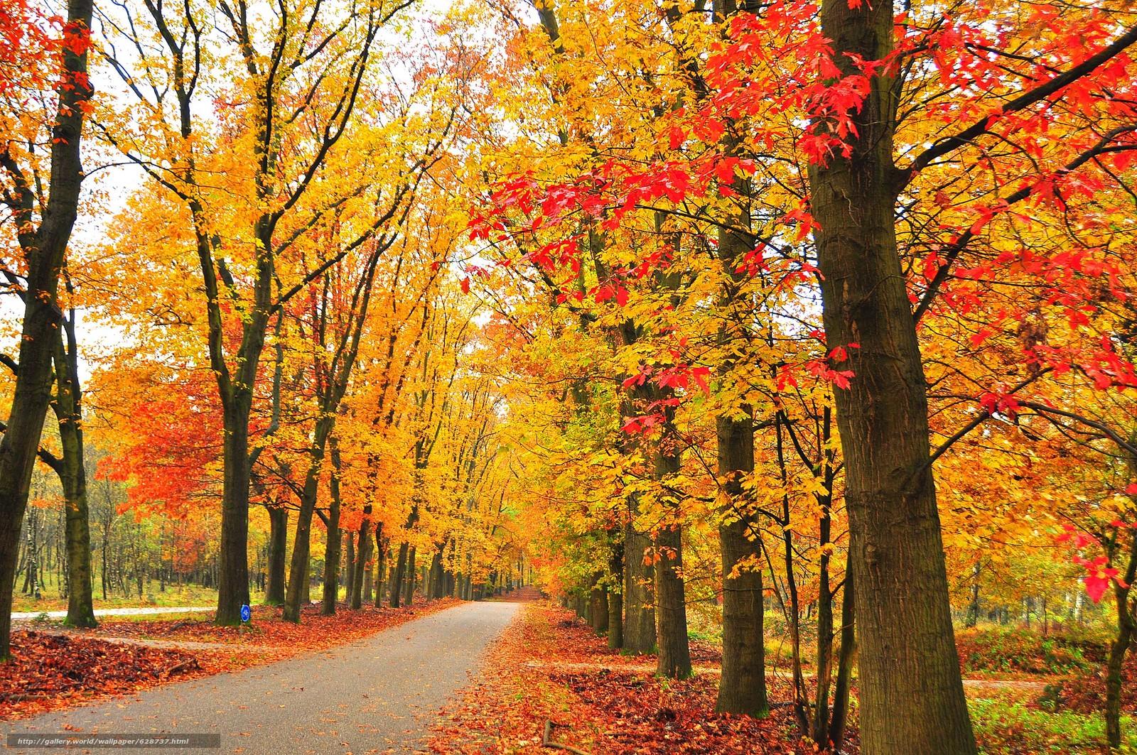 estrada, ?rvores, parque, paisagem, outono