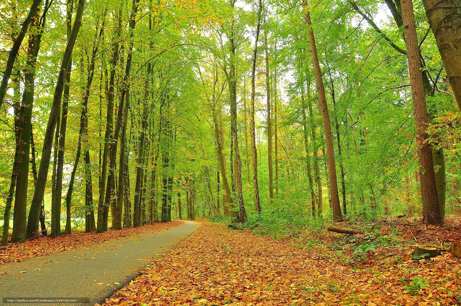 дорога, деревья, парк, пейзаж, осень