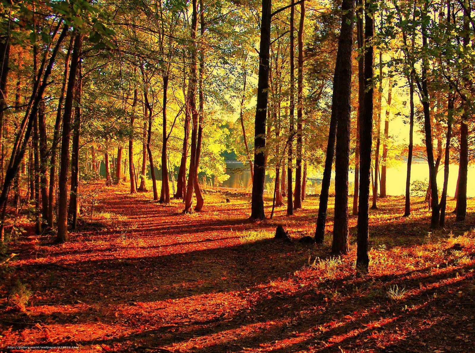 estrada, ?rvores, parque, lagoa, outono, paisagem