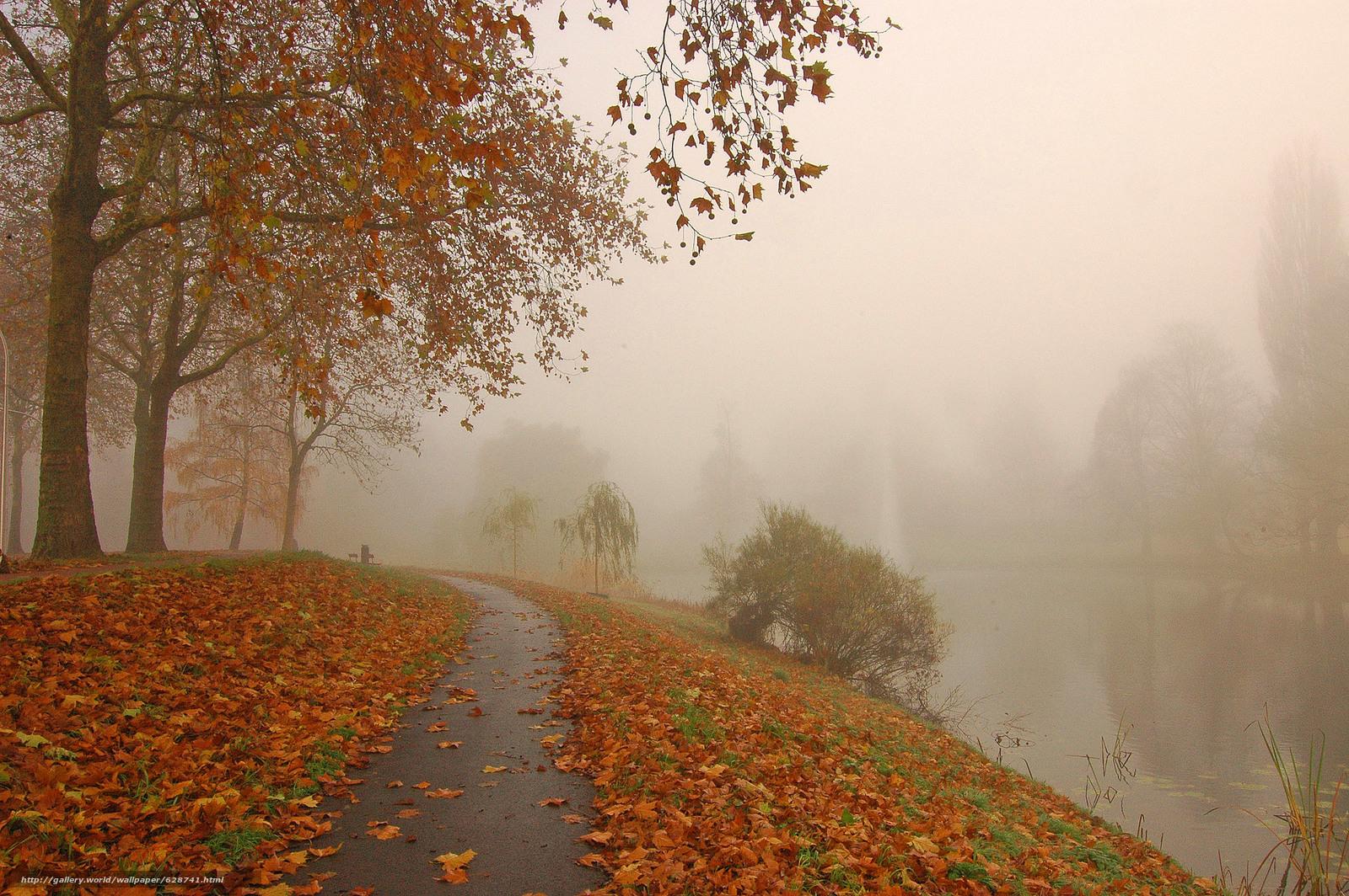 parque, canal, estrada, ?rvores, outono, nevoeiro, paisagem