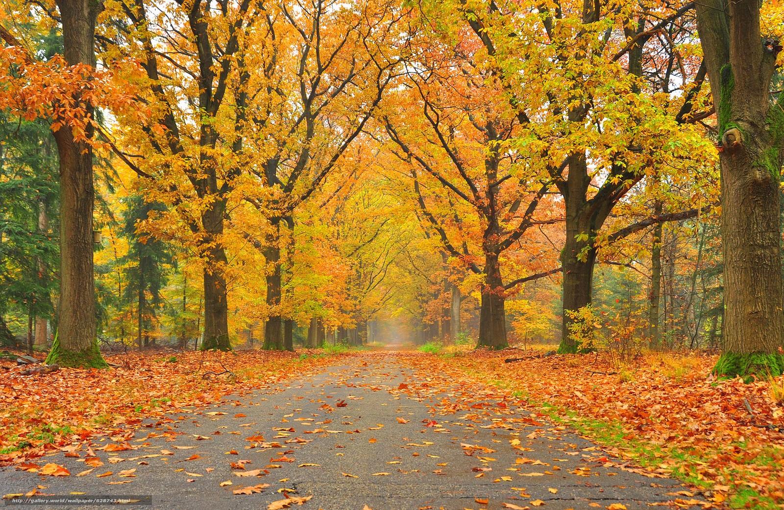 ?rvores, parque, estrada, paisagem, outono