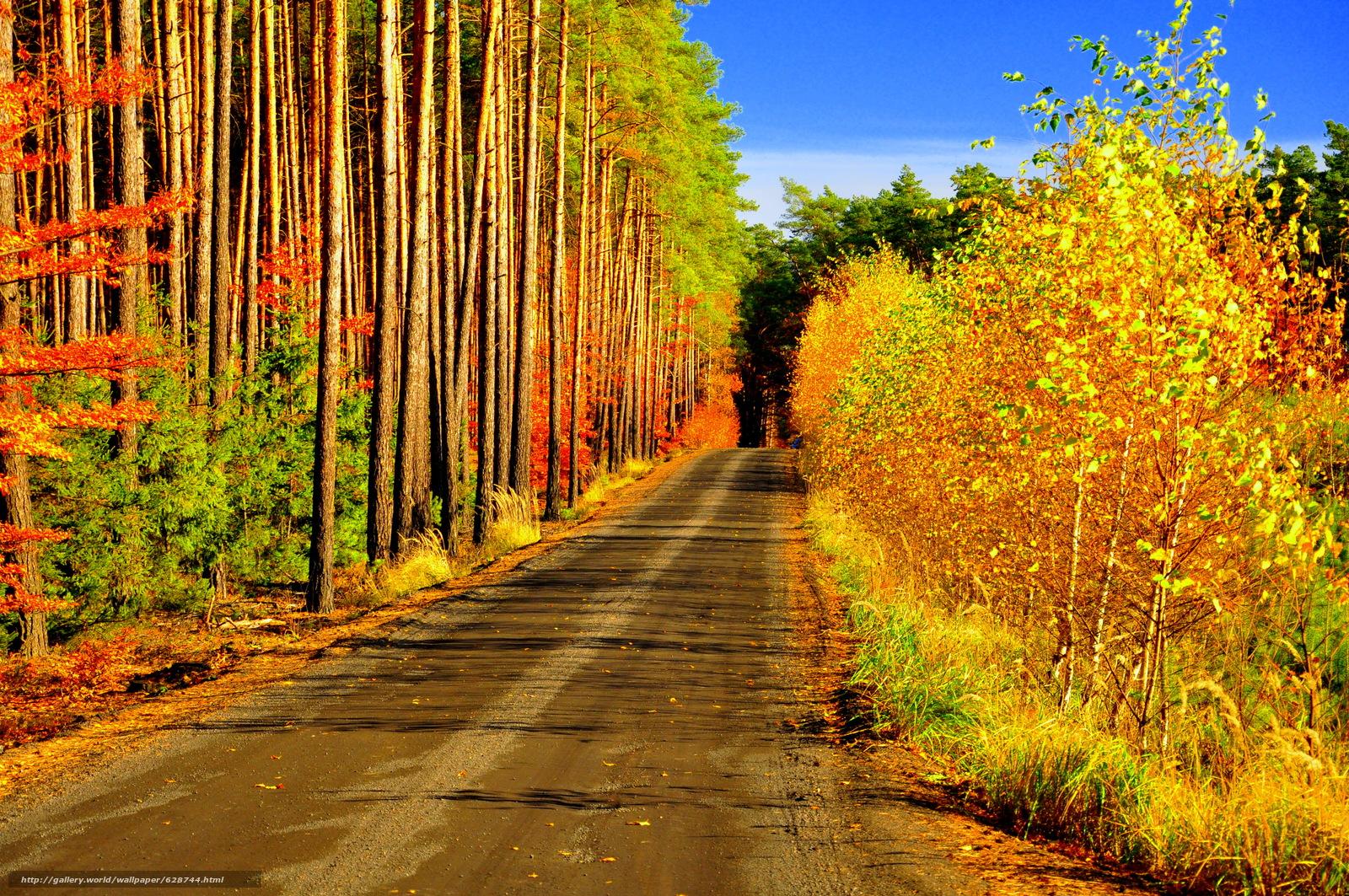 floresta, ?rvores, estrada, paisagem, outono