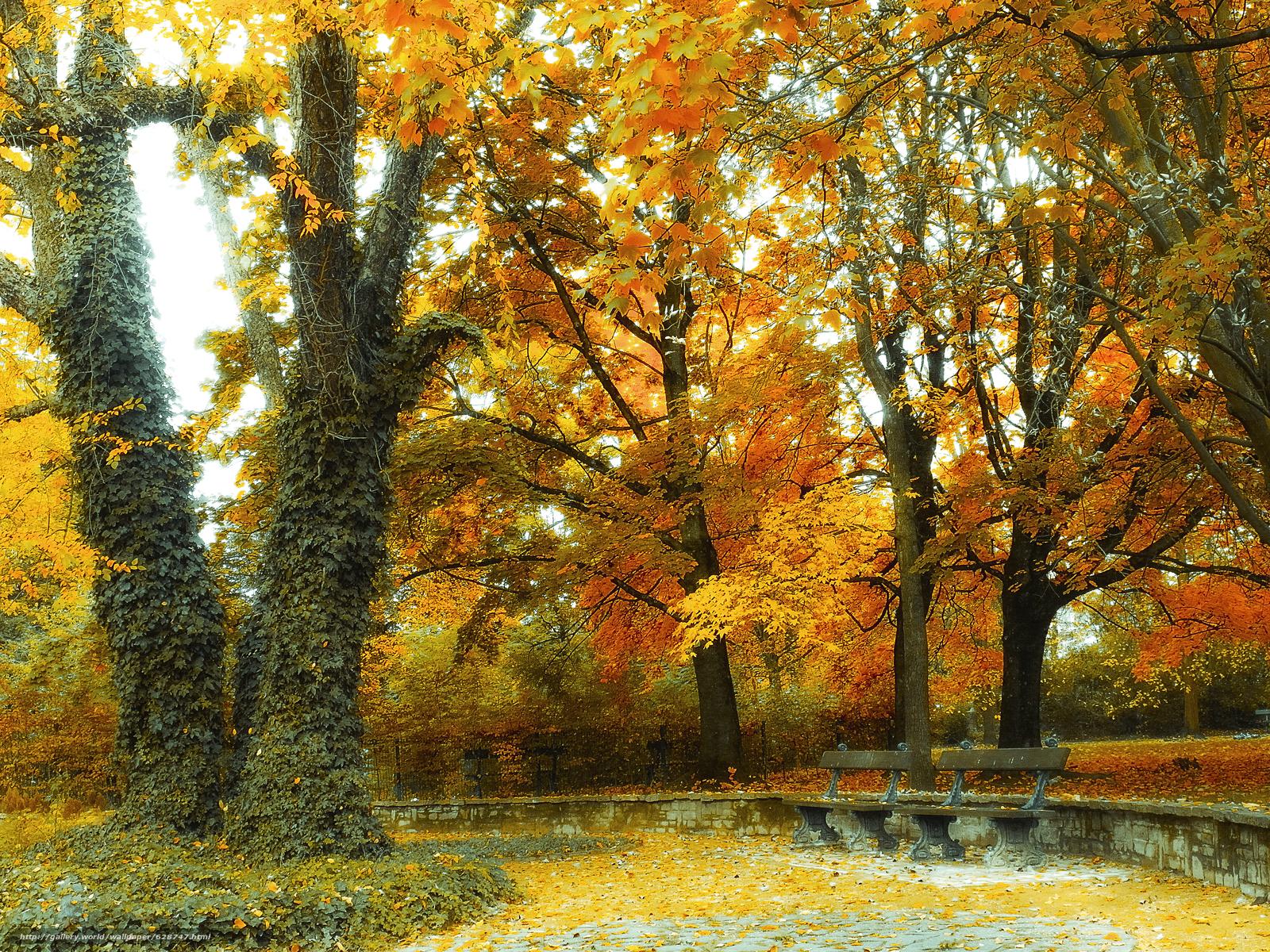 ?rvores, lojas, outono, paisagem, parque