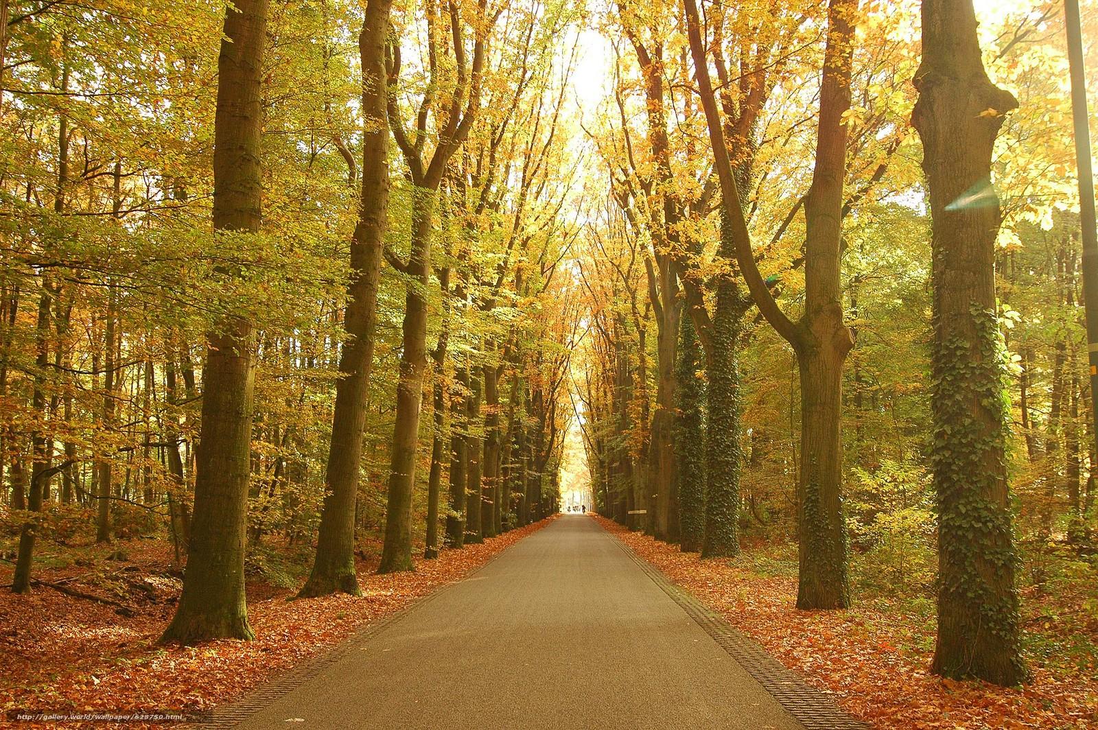 ?rvores, estrada, parque, paisagem, outono