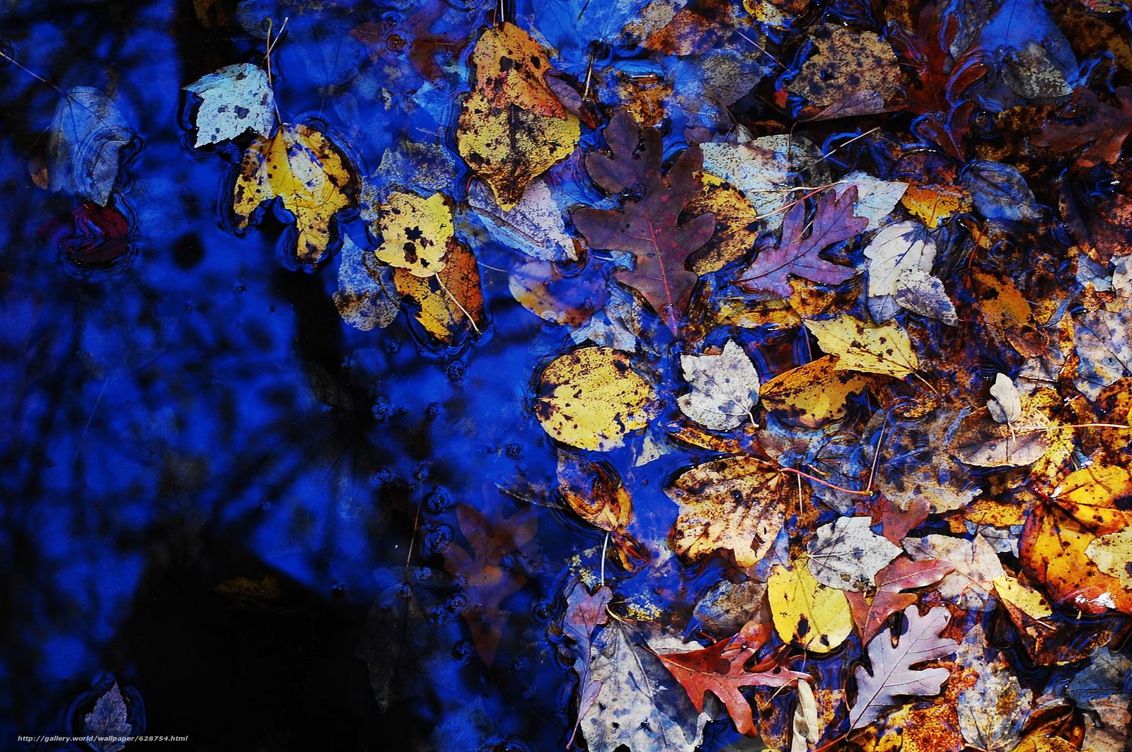 лужа, природа, листья, осень