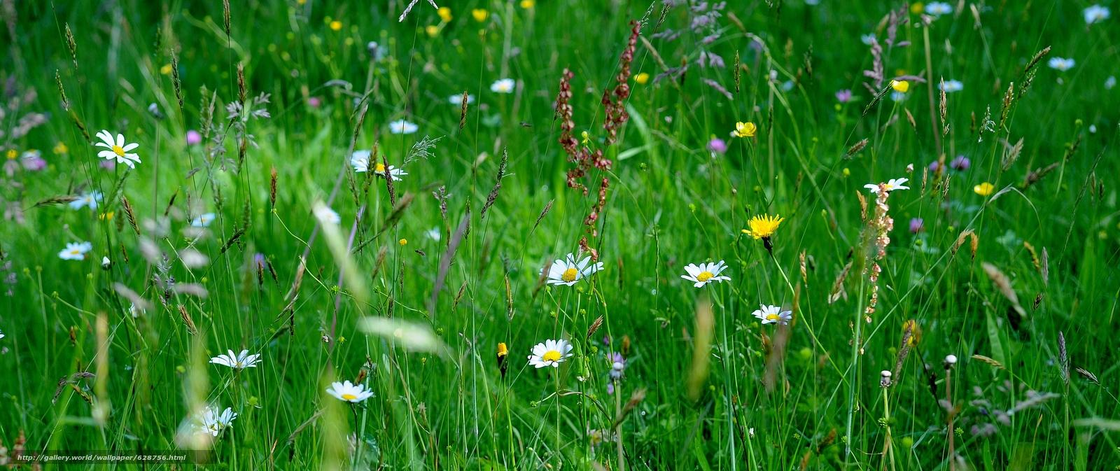 цветы, макро, трава, поле
