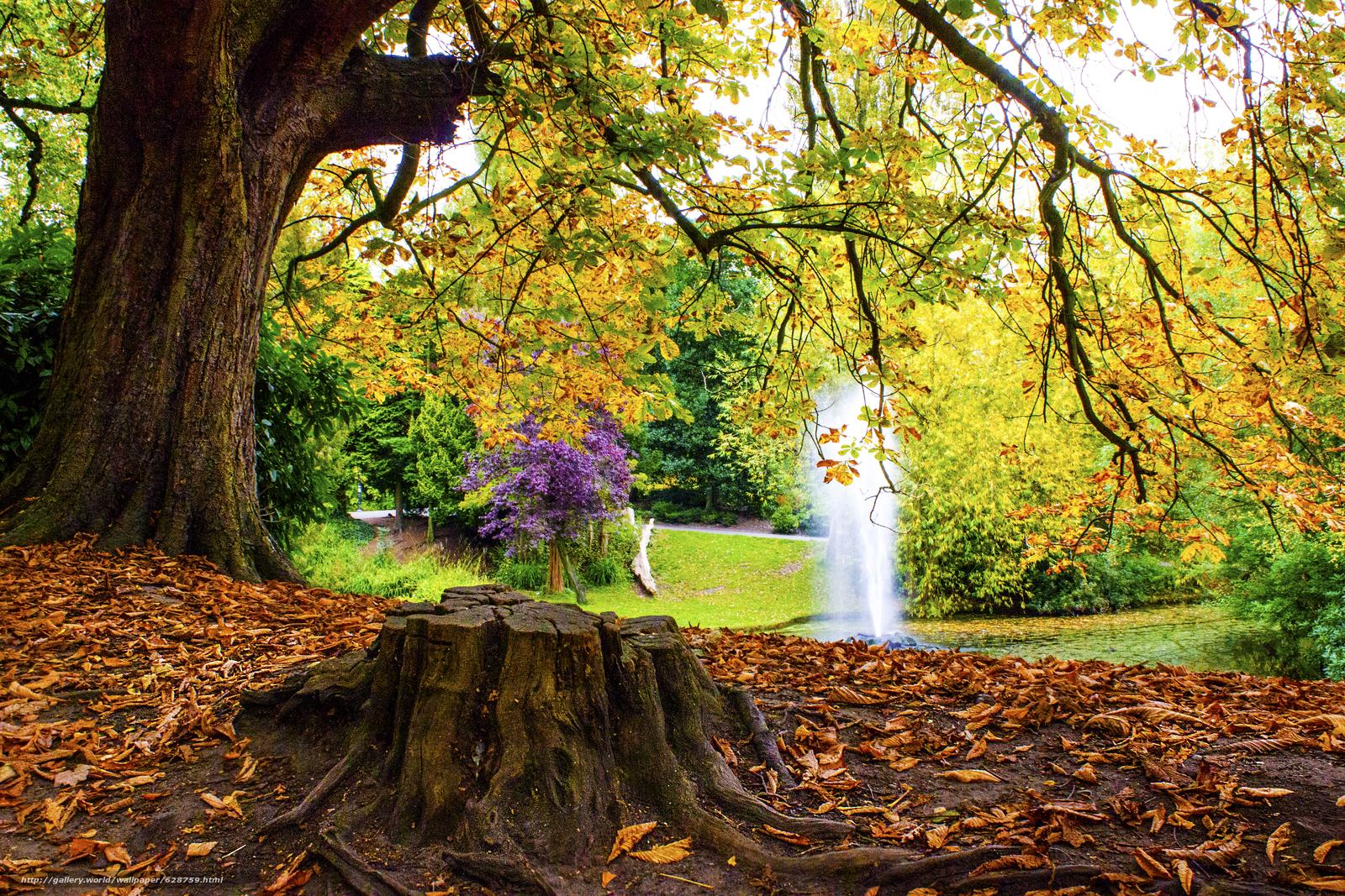 пруд, фонтан, парк, деревья, осень, пейзаж