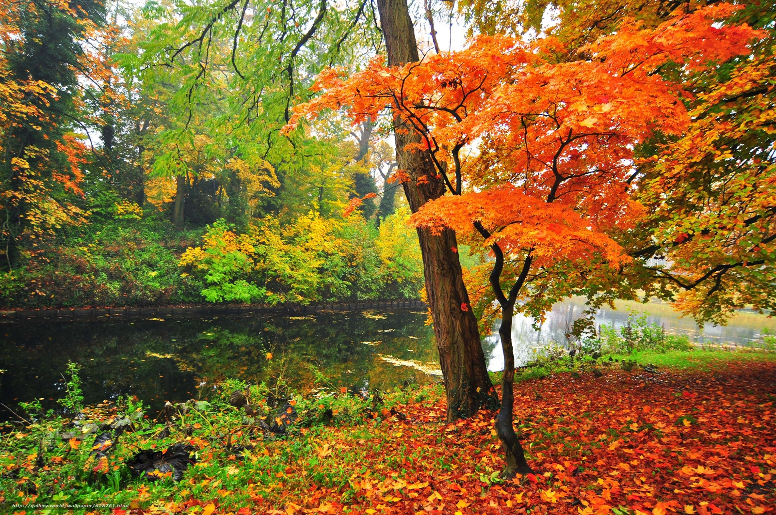 пруд, деревья, парк, пейзаж, осень