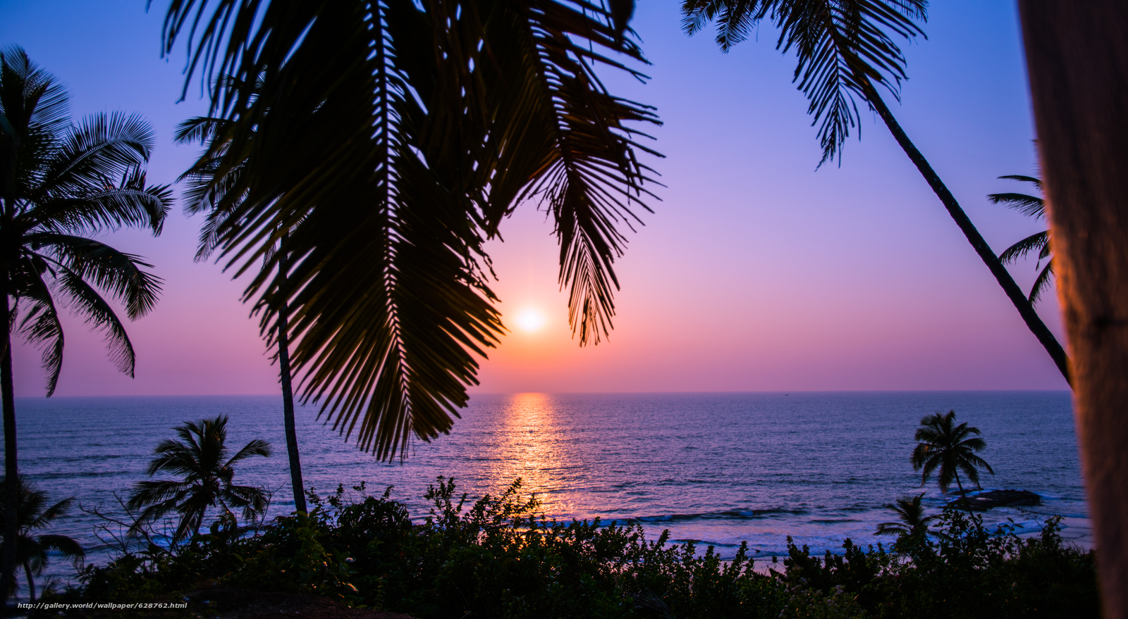закат, море, India, пальмы, Sunset in Goa, пейзаж