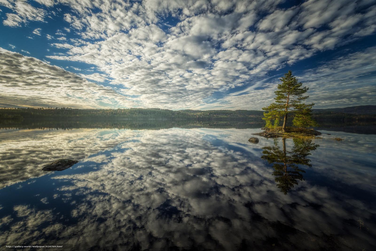 pinho, ?rvore, ?gua, ilha, ba?a, c?u, Nuvens, reflex?o