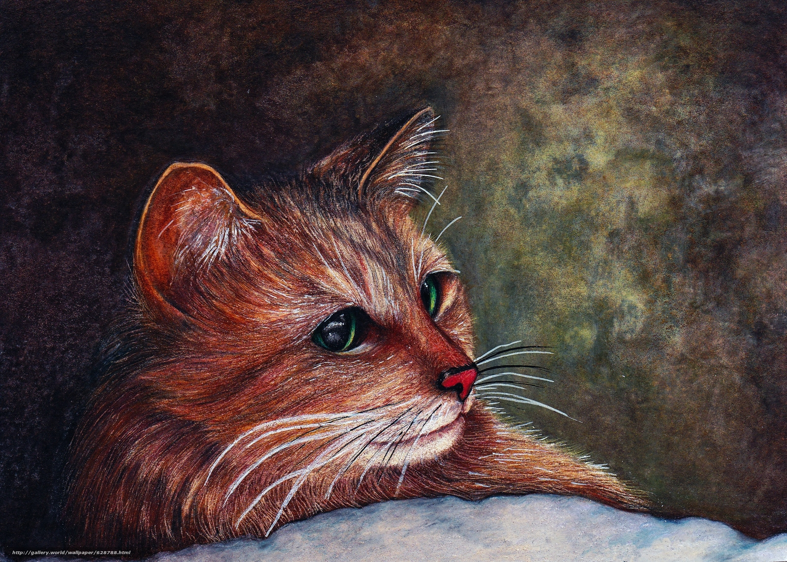 ver, arte, focinho, gato