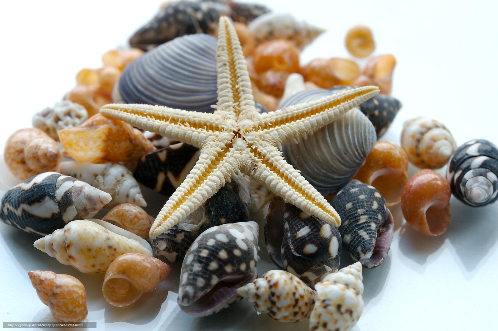 Macro, estrela do mar, SEASHELLS