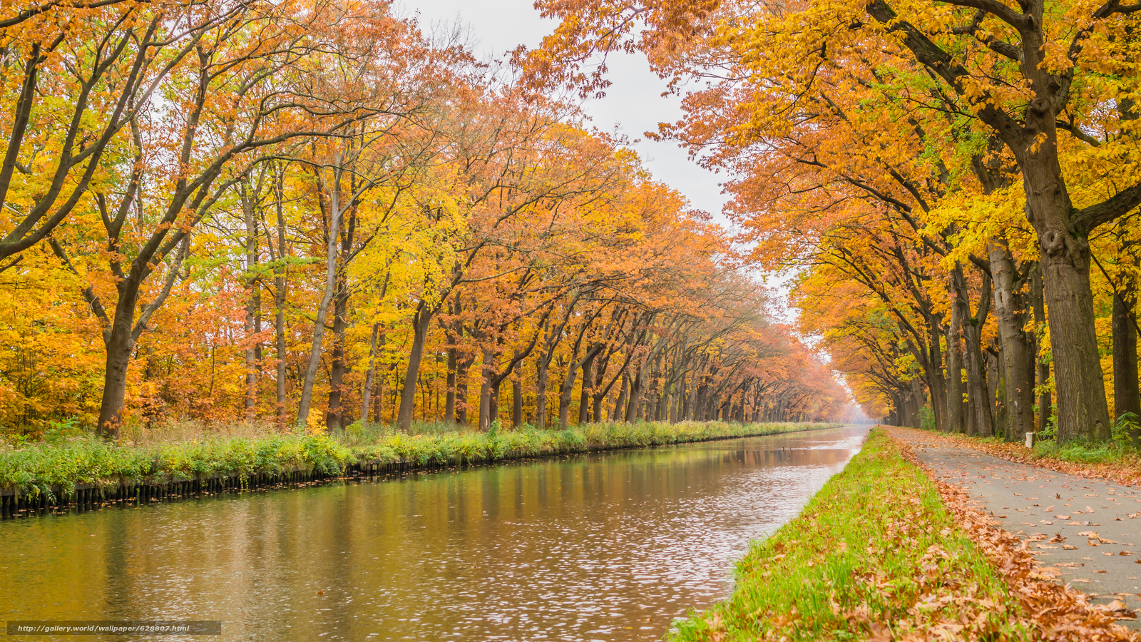 дорога, деревья, канал, пейзаж, осень