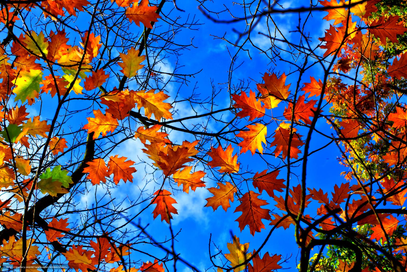 ветки, листья, небо, природа, осень