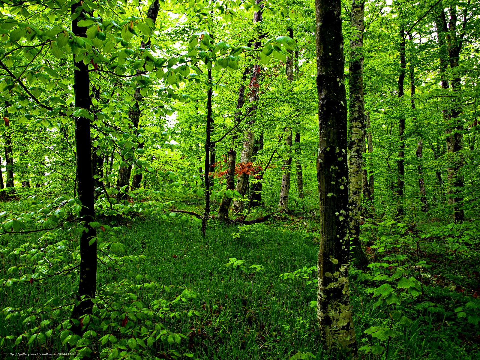 природа, деревья, лес