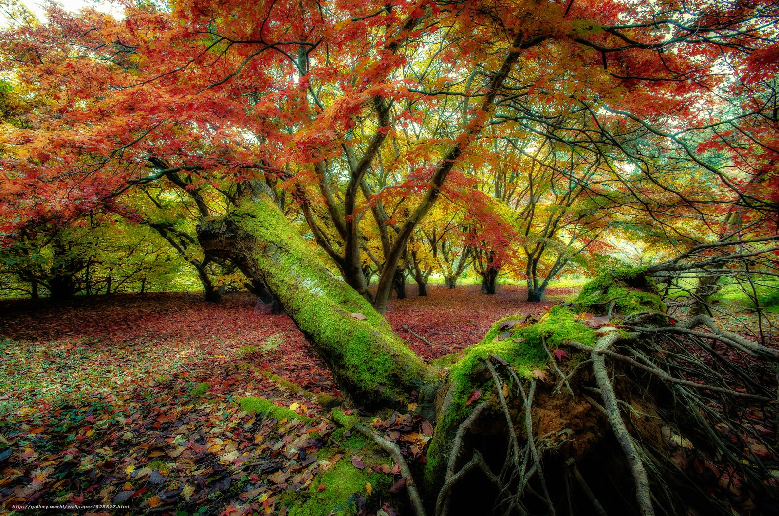 лес, природа, деревья, осень