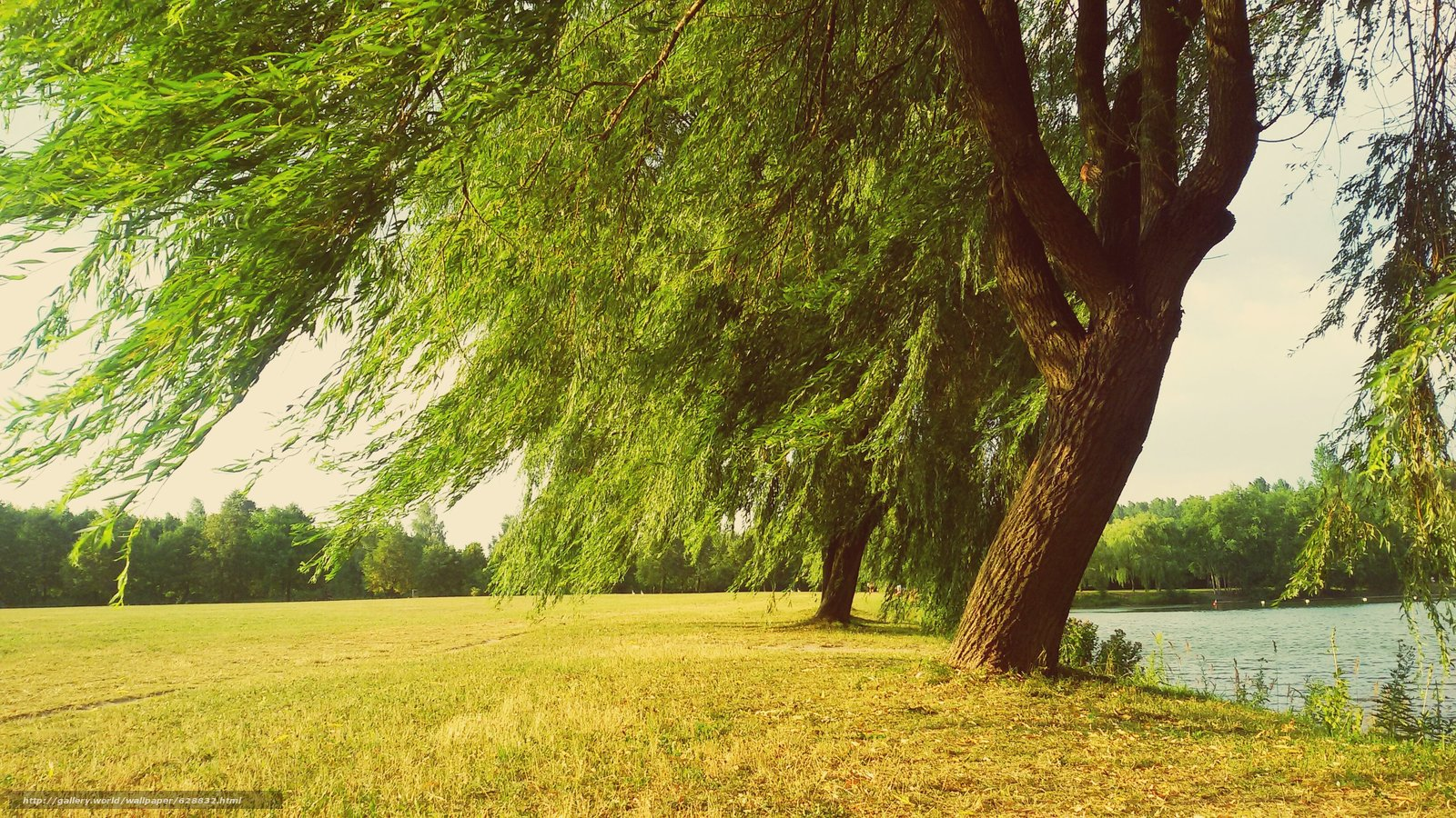 река, пейзаж, деревья, поле