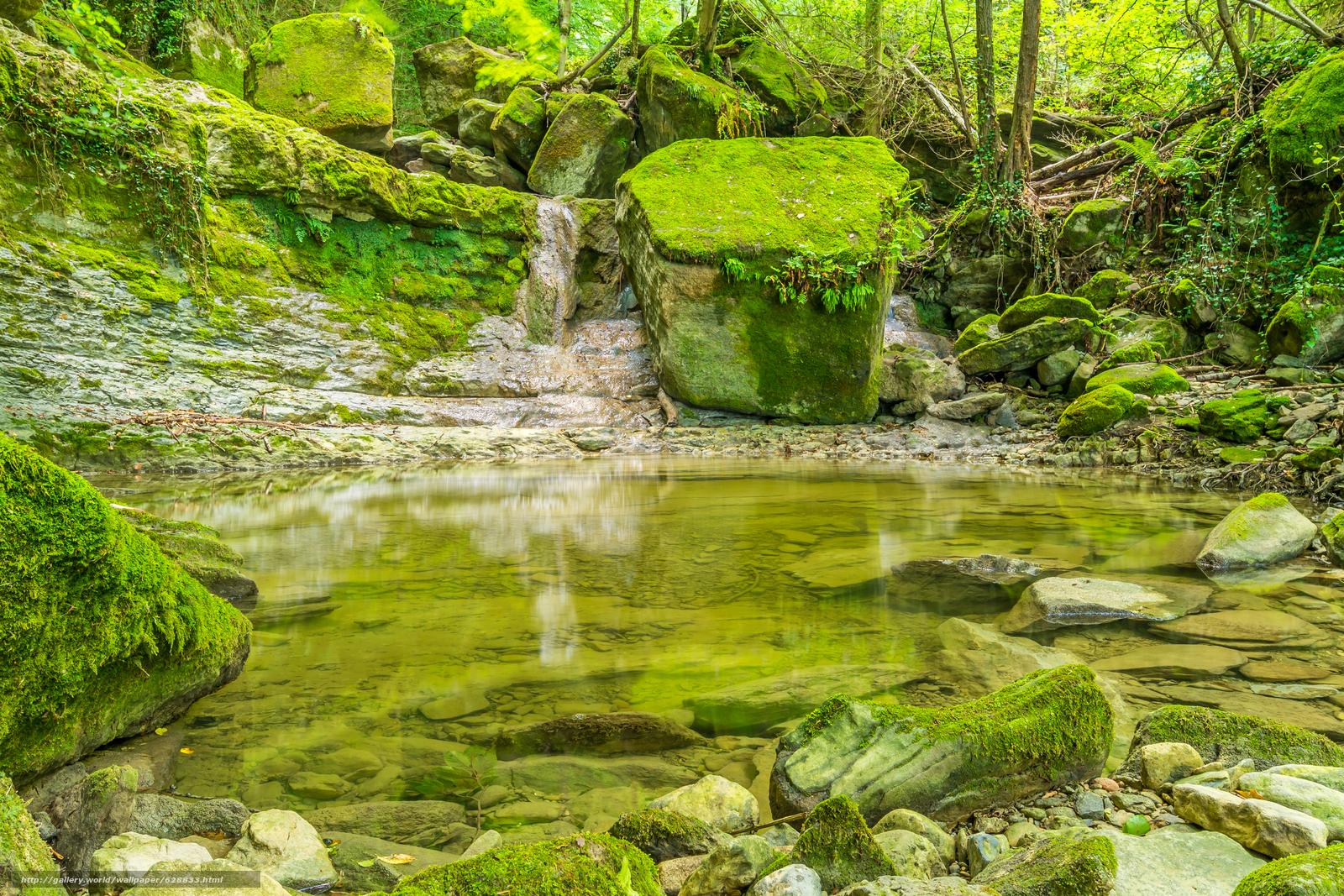 Rochas, natureza, ?rvores, floresta