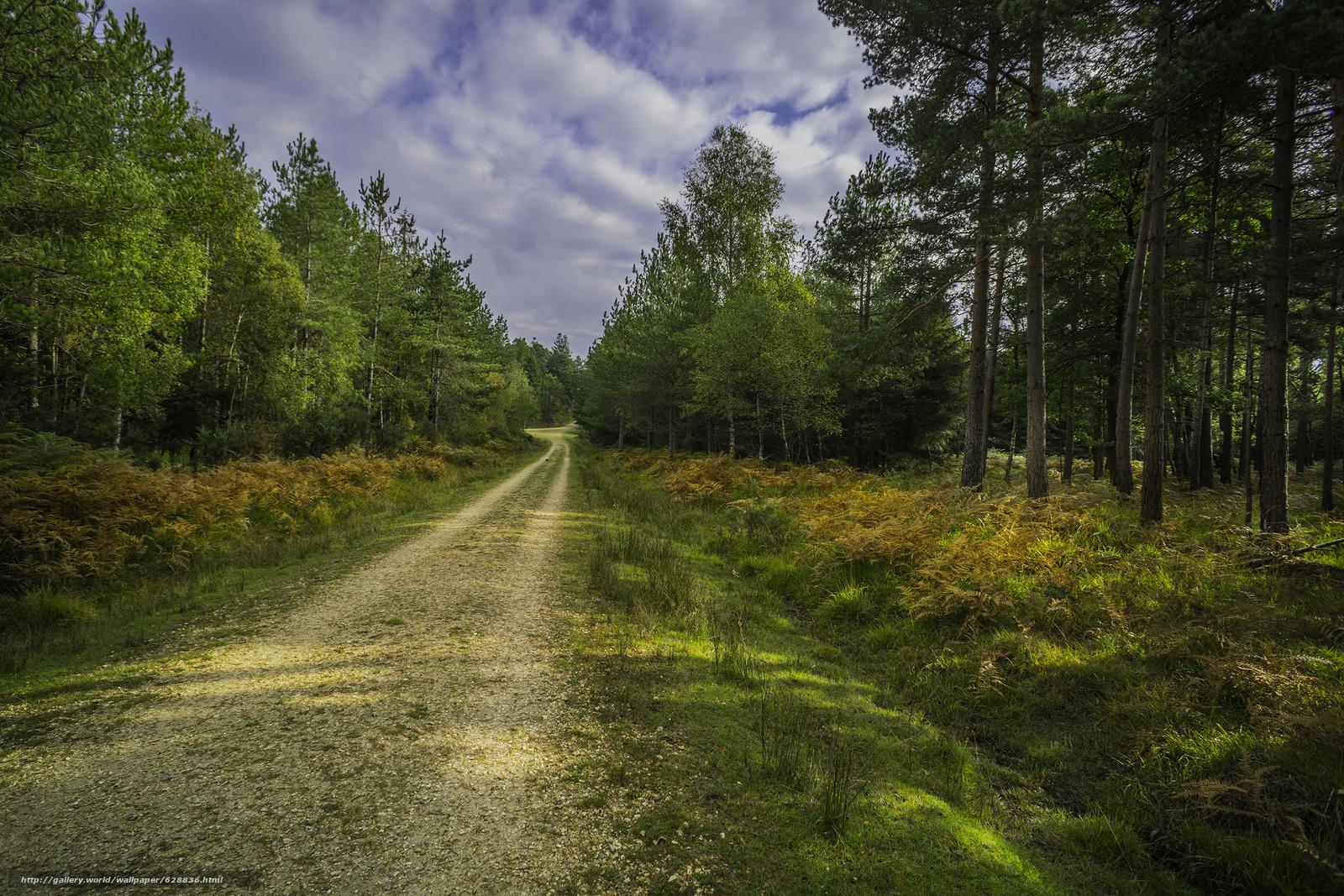 estrada, ?rvores, floresta, paisagem, outono