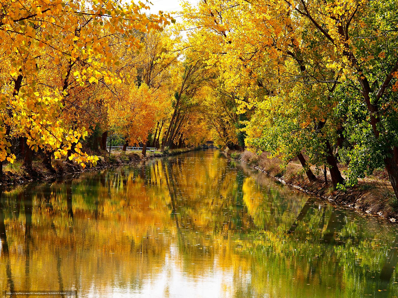 ?rvores, paisagem, canal, outono