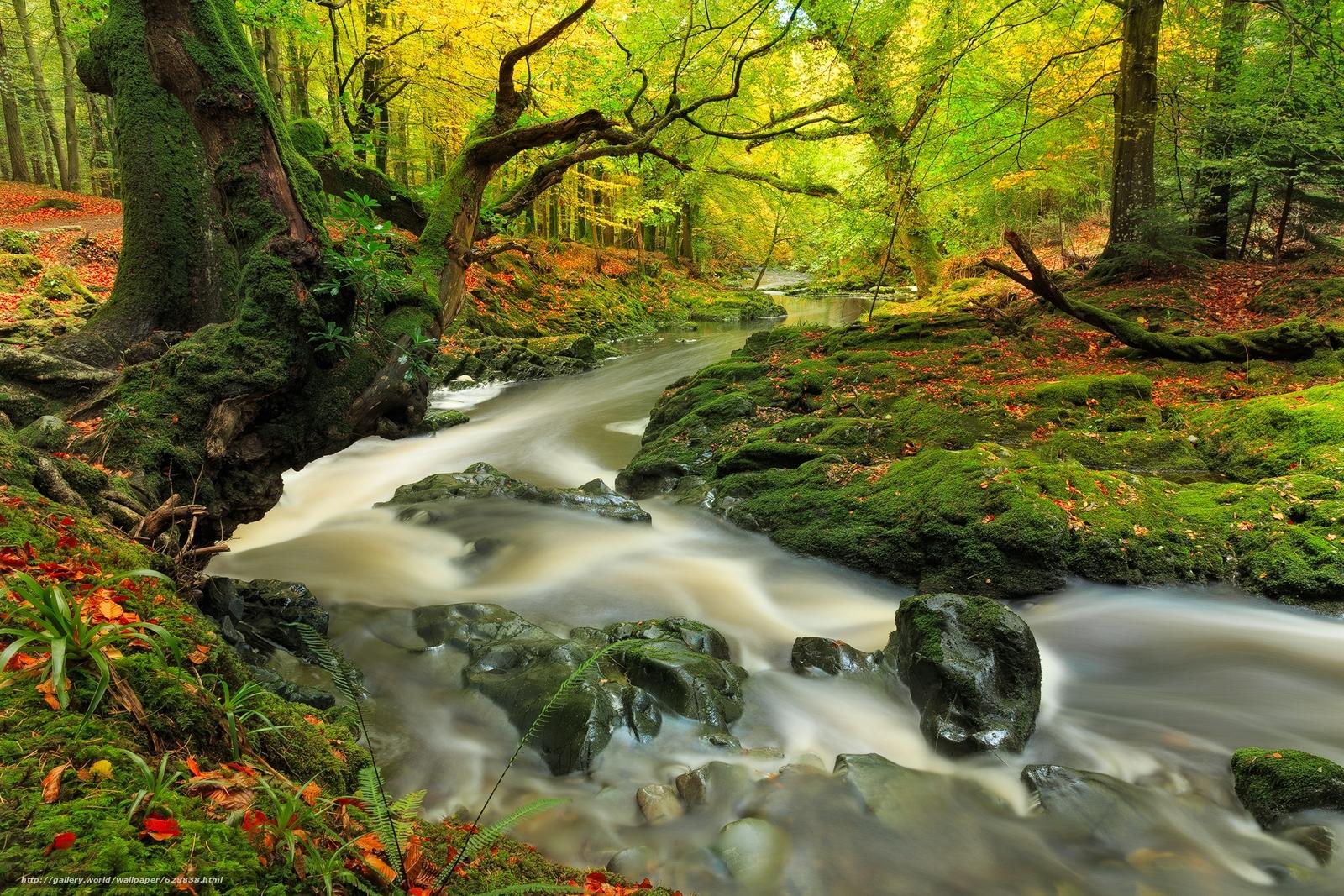 rio, ?rvores, floresta, natureza, outono