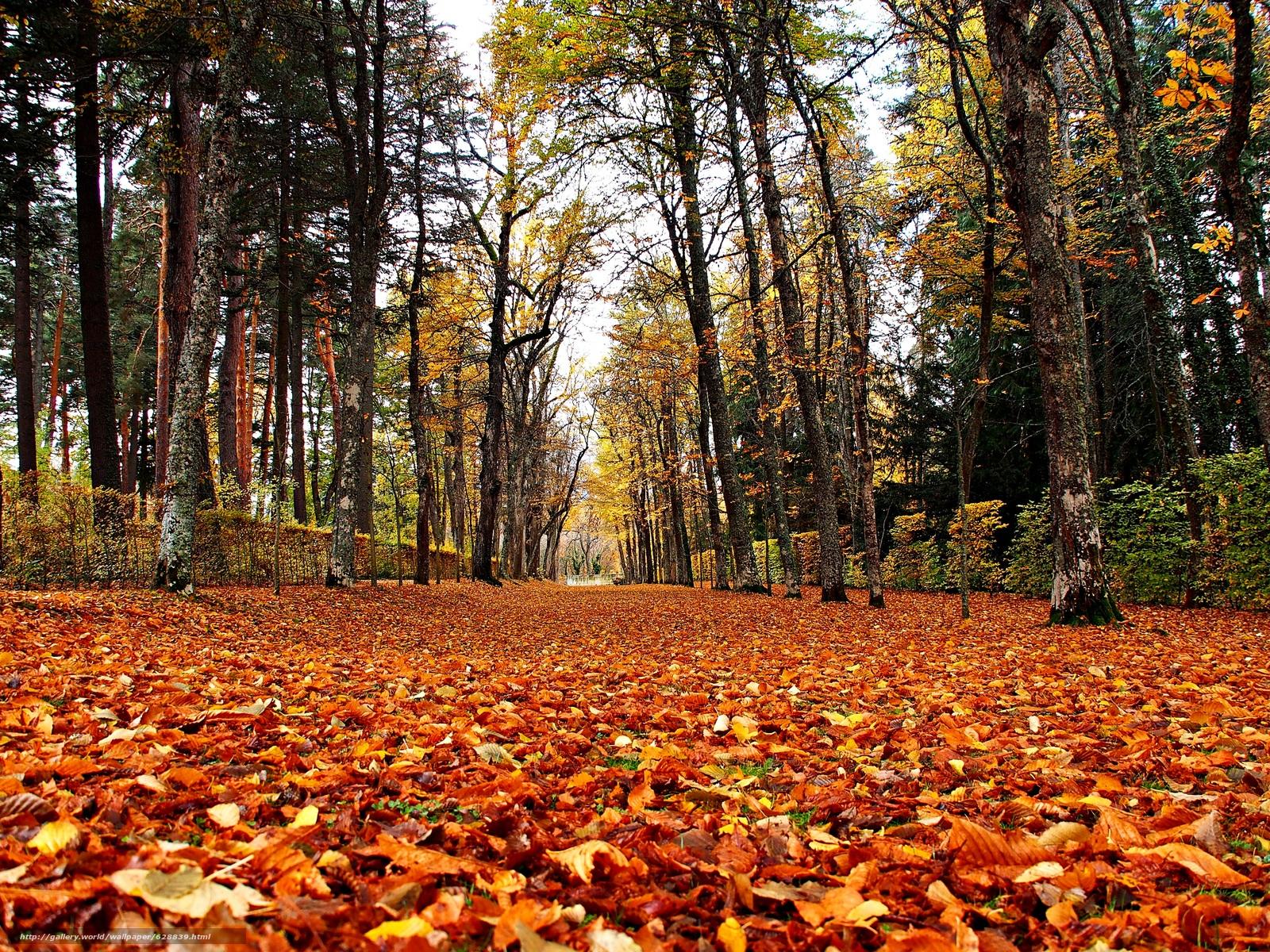 деревья, дорога, парк, пейзаж, осень