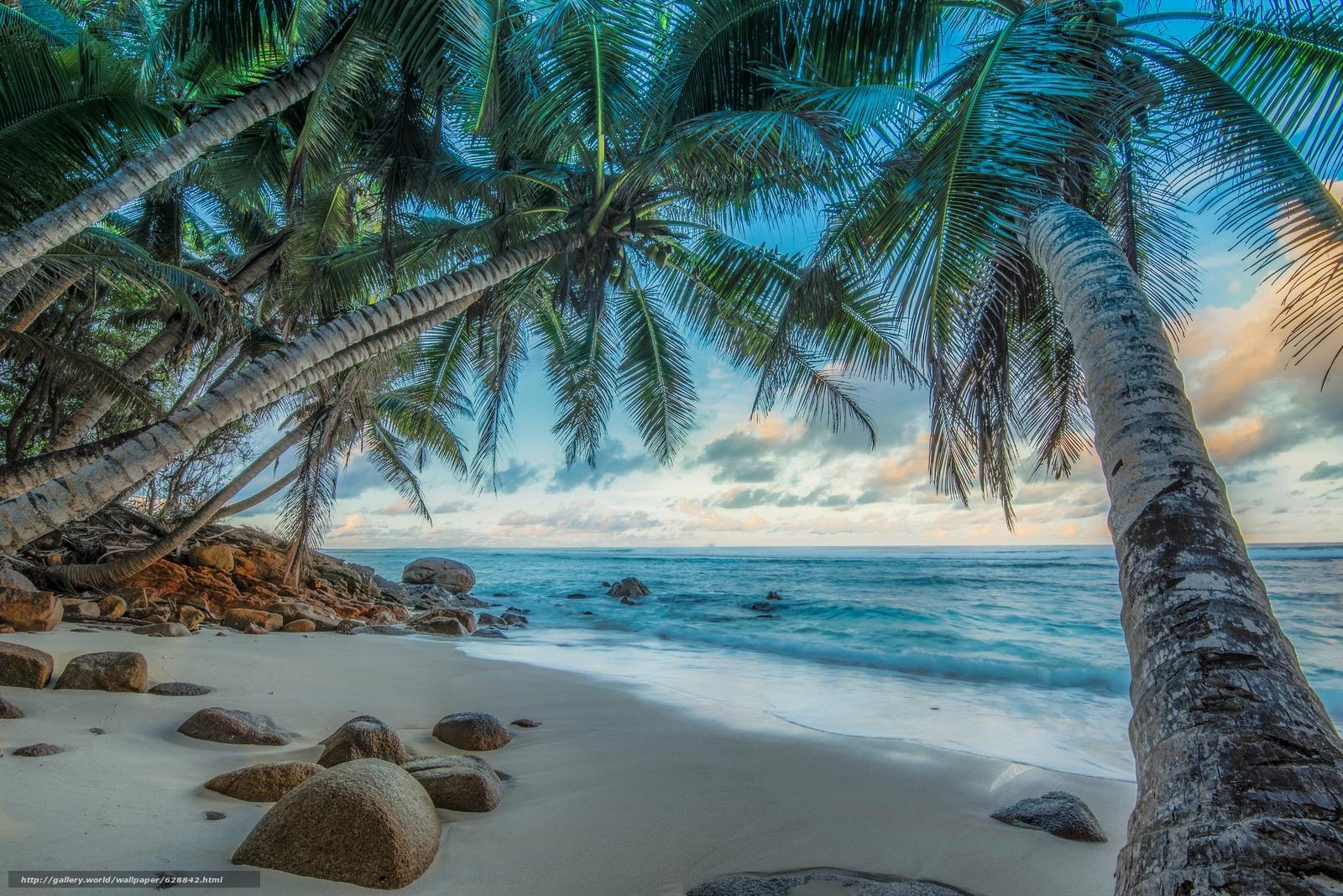 пальмы, берег, море, камни, Seychelles, пейзаж