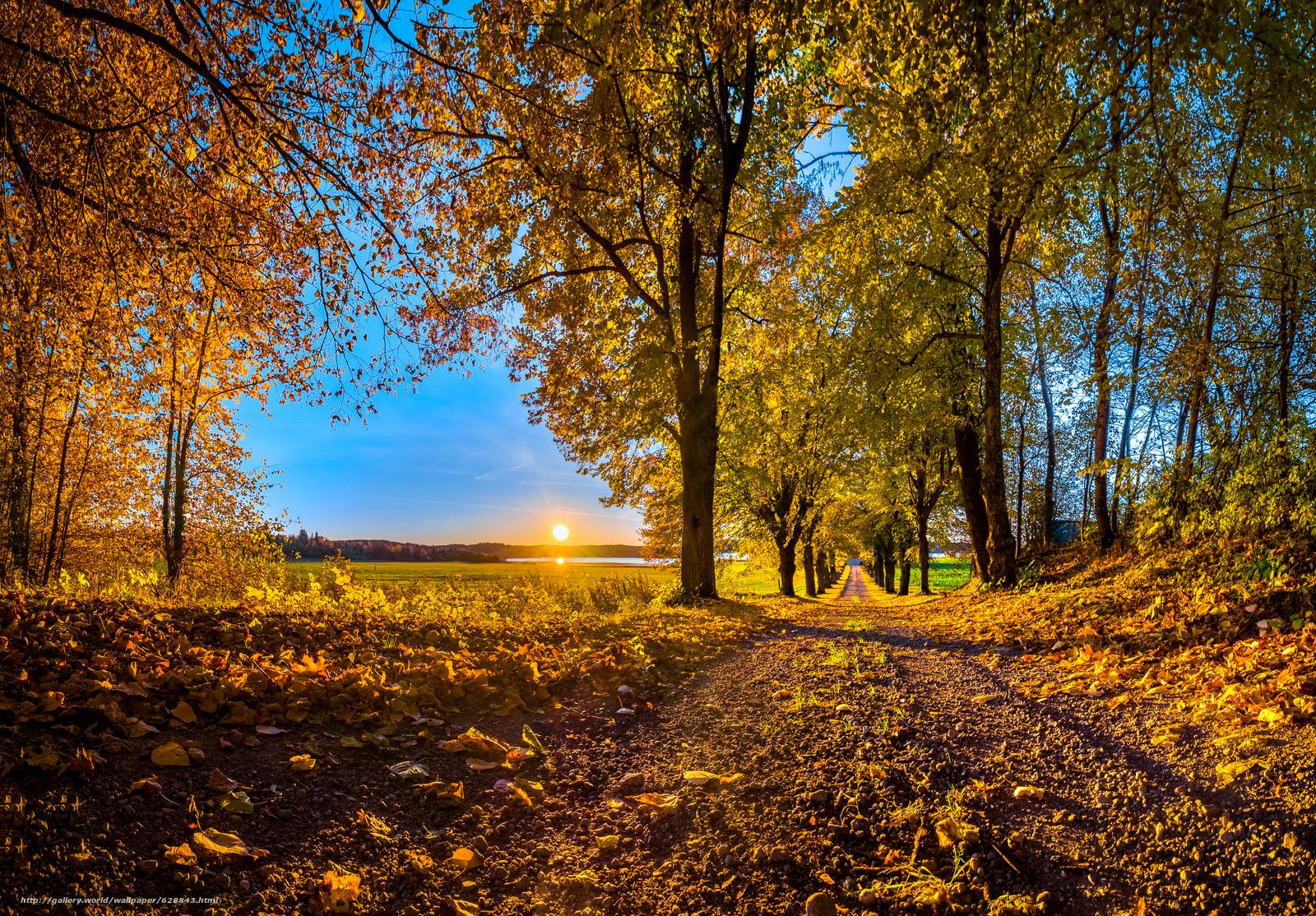 Обои осень, закат, лес, дорога, деревья, пейзаж