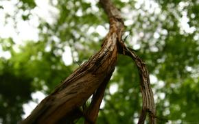 arbre, tronc, feuillage, corce