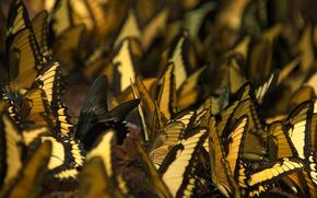 разное, насекомые, бабочки, обои