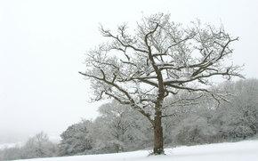 пейзажи, снег, зимние обои, зима, деревья